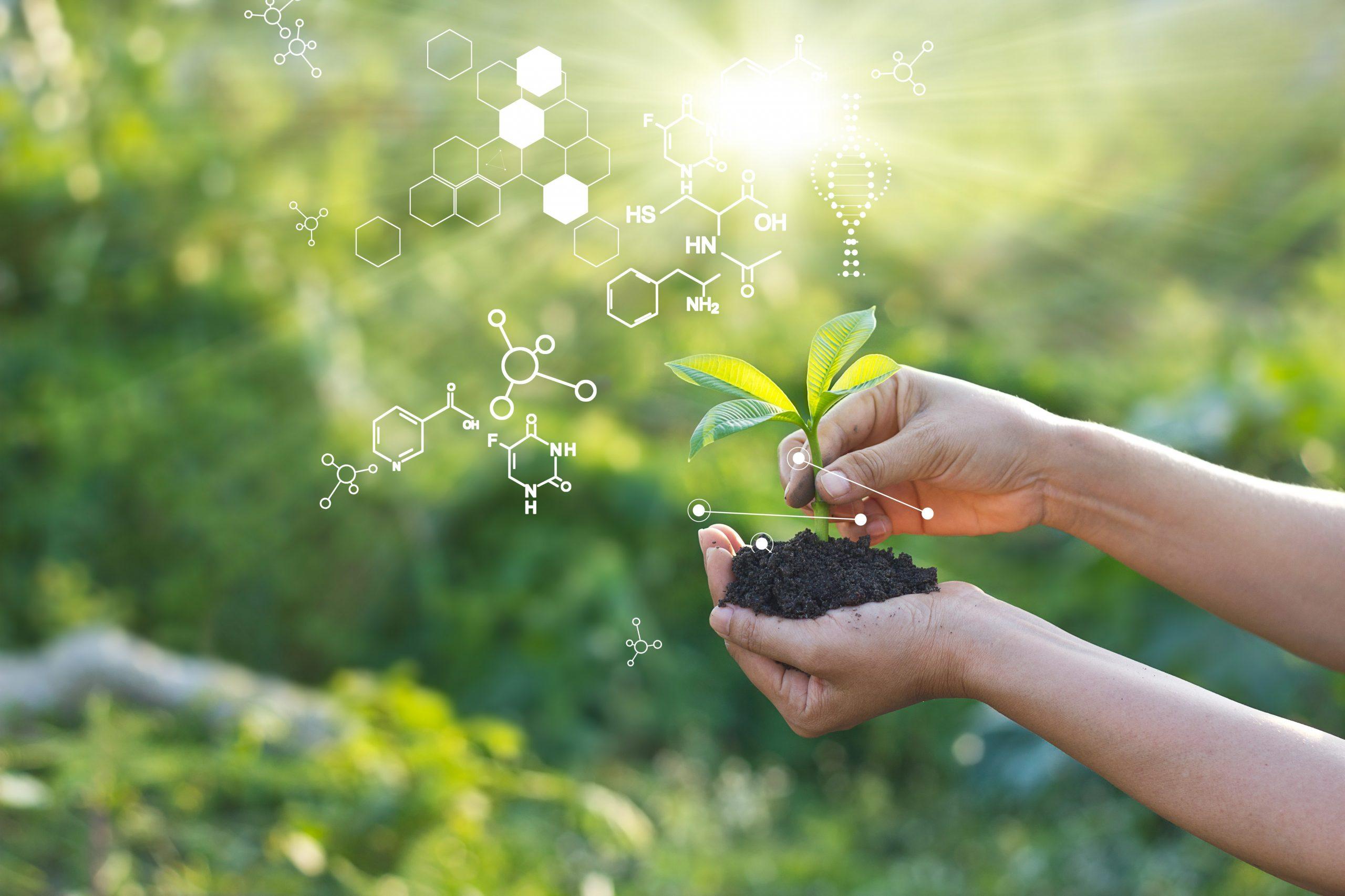 anti-age kasvien kantasolut